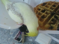 I love Blueberry & Pecan Waffles from Dot\'s!